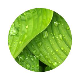 Символика на зеленото