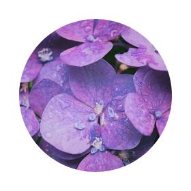 Символика на лилавото