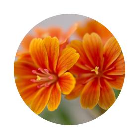 Символика на оранжевото