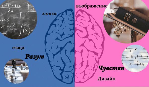 Полукълбата на мозъка и функциите им